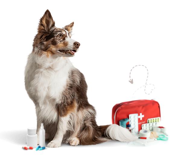 banner-farmacia-veterinaria